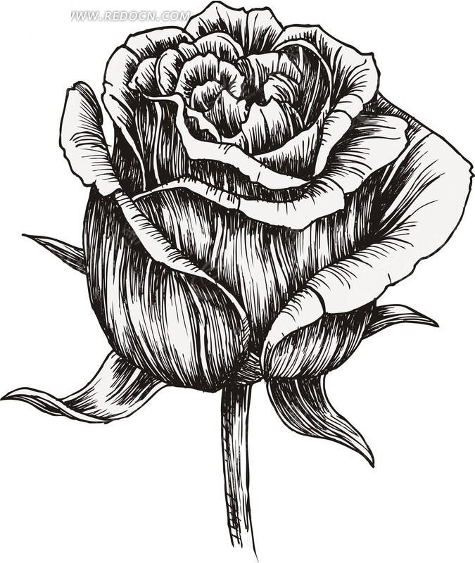 手绘线稿玫瑰矢量素材矢量图 花草树木