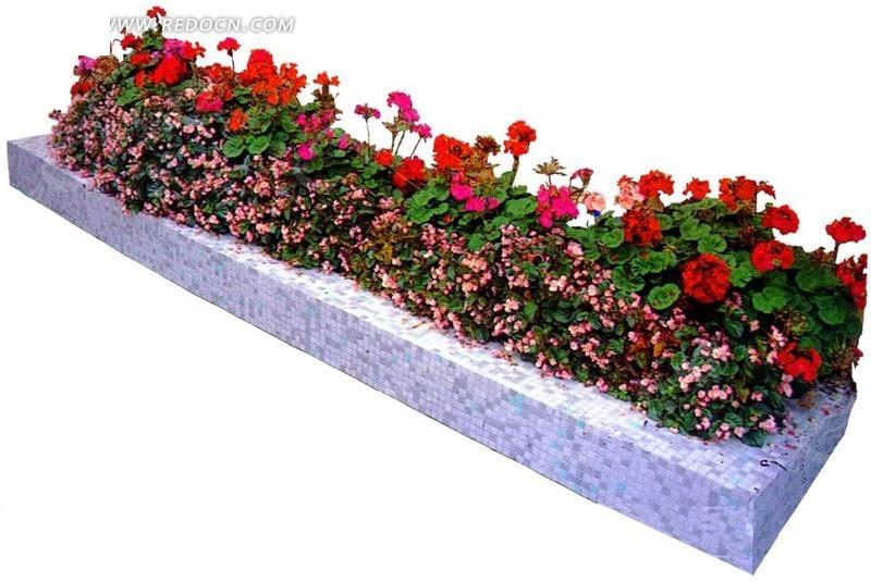 种满小花长方形花坛