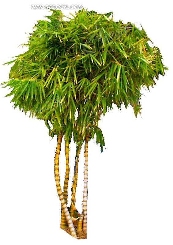 植物 绿化 竹子 绿化素材 园林景观 psd分层素材  植物图片 psd分层