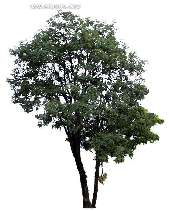 高清树木图片抠图素材