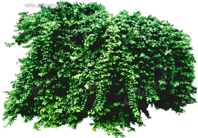 园林绿化灌木设计素材 [psd]_植物