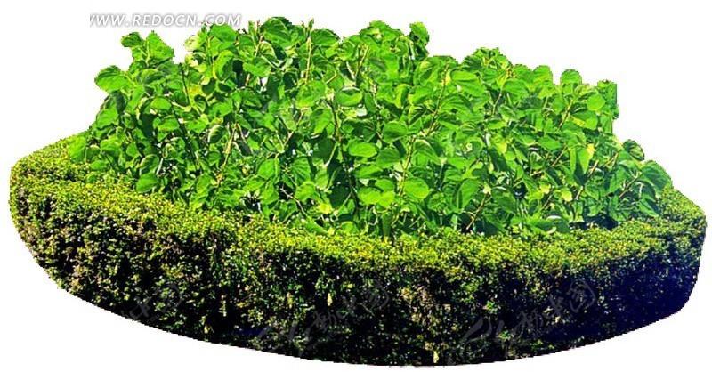 城市园林灌木psd素材_植物