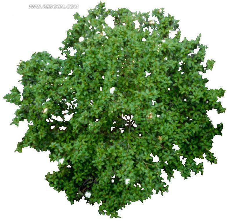 平面景观植物抠图素材