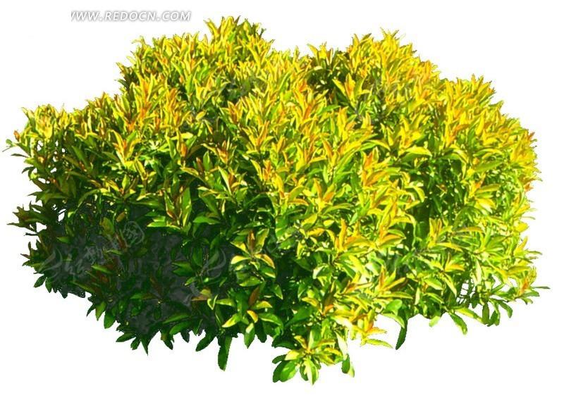 阳光照耀的绿叶抠图素材