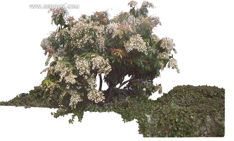 园林灌木花丛psd素材_植物