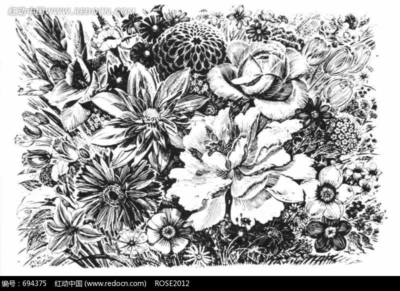 牡丹/菊花/玫瑰/大丽菊构成的写实风格图片