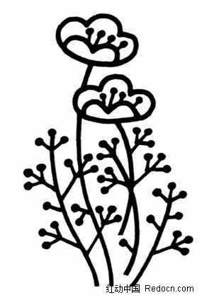 黑白植物花卉图片素材