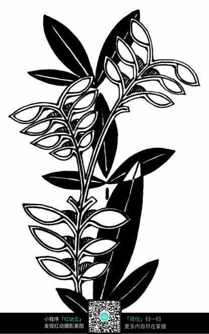 黑白植物插画图案