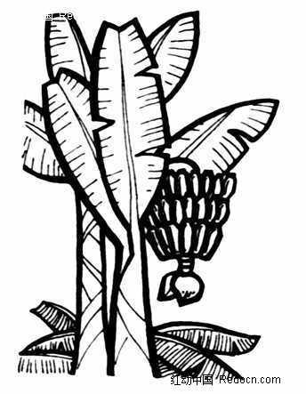 挂住香蕉的香蕉树图案图片