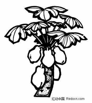 一棵木瓜树图案图片
