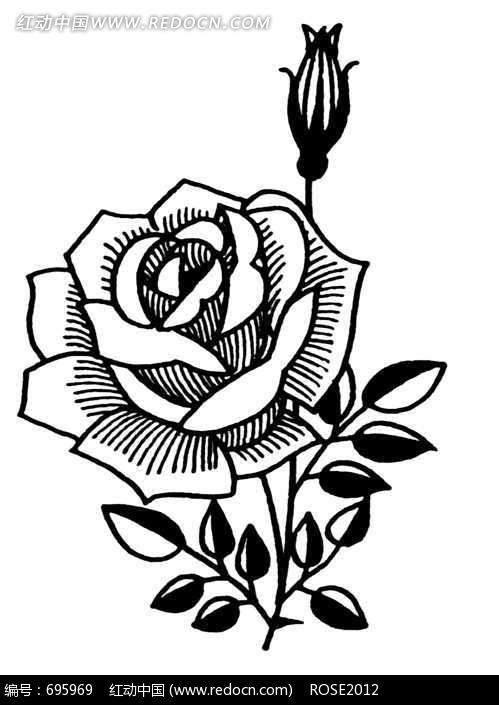 玫瑰花与花蕾叶子黑白图案图片