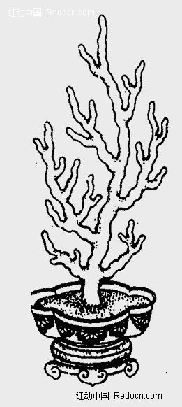 植物图案花纹 线描 图案  珊瑚树 图片素材 灰色背景 盆景 花纹 花纹