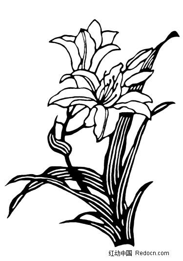黑白兰花剪影图片