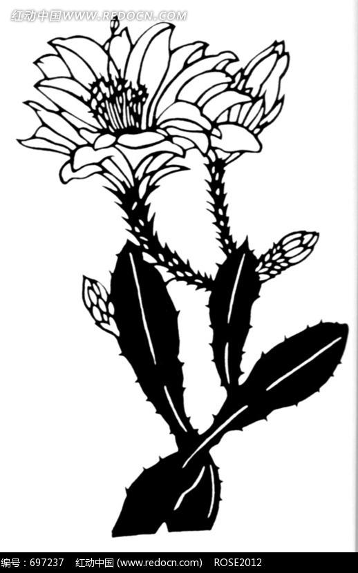 仙人掌花黑白图案图片