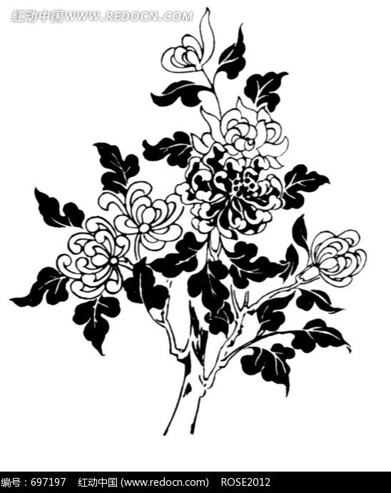 黑白线条菊花底纹图片素材