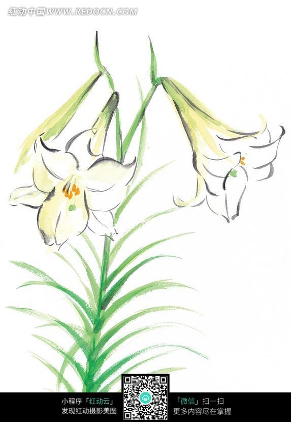 手绘白色百合花与叶子