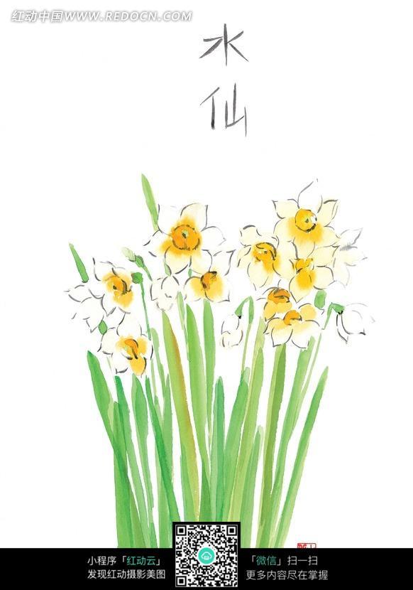 手绘水仙花与叶子
