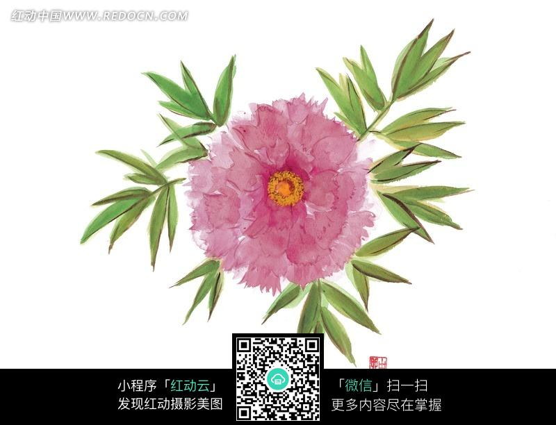 手绘芍药花与叶子