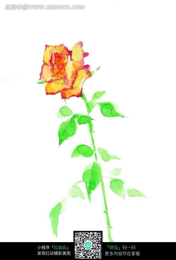一枝黄色的玫瑰花图片