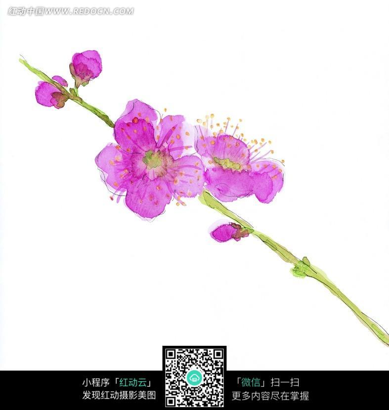 手绘桃花图片素材图片 花纹花边图片