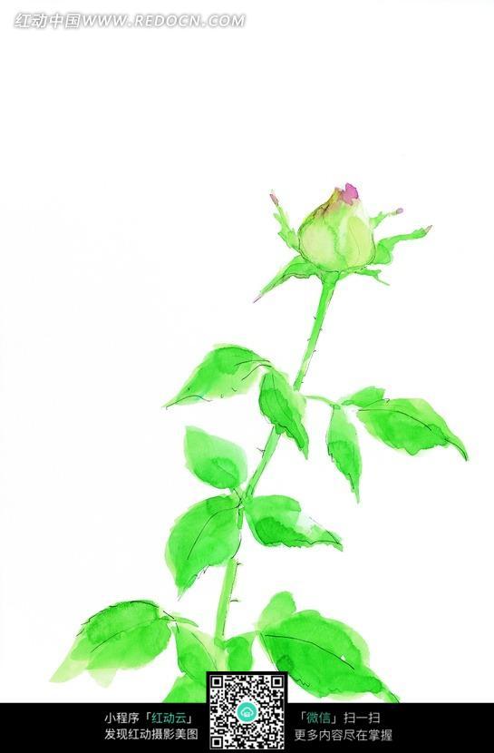 手绘月季花花蕾与叶子图片_花纹花边图片