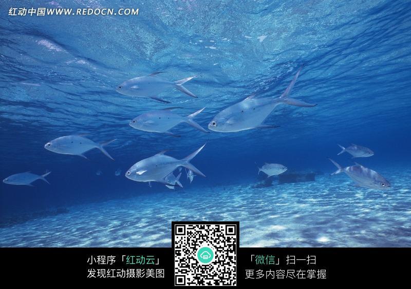 深海鱼群背景