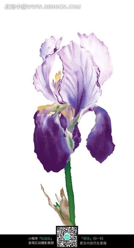 彩铅手绘花朵素材