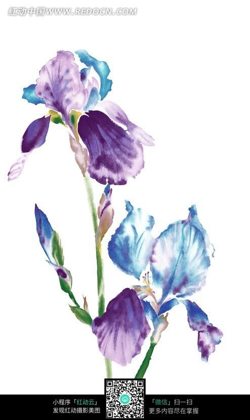 免费素材 图片素材 背景花边 花纹花边 手绘鸢尾花与花蕾