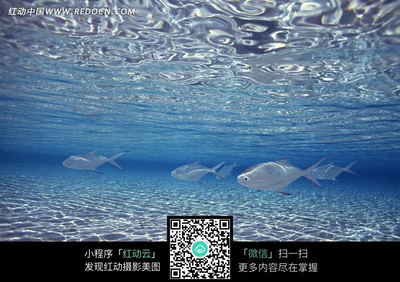 海底 自由自在 鱼儿 海底世界 水生物 动物 jpg 动物图片 动物照片