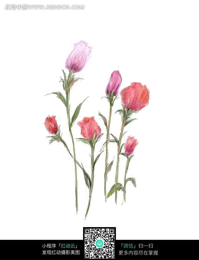 手绘的鲜花