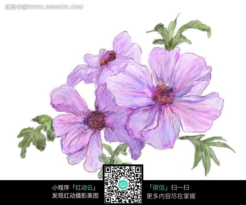 手绘紫色花朵与叶子图片