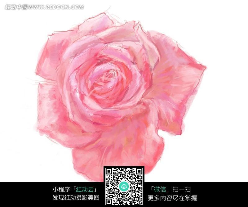 手绘粉红色玫瑰花