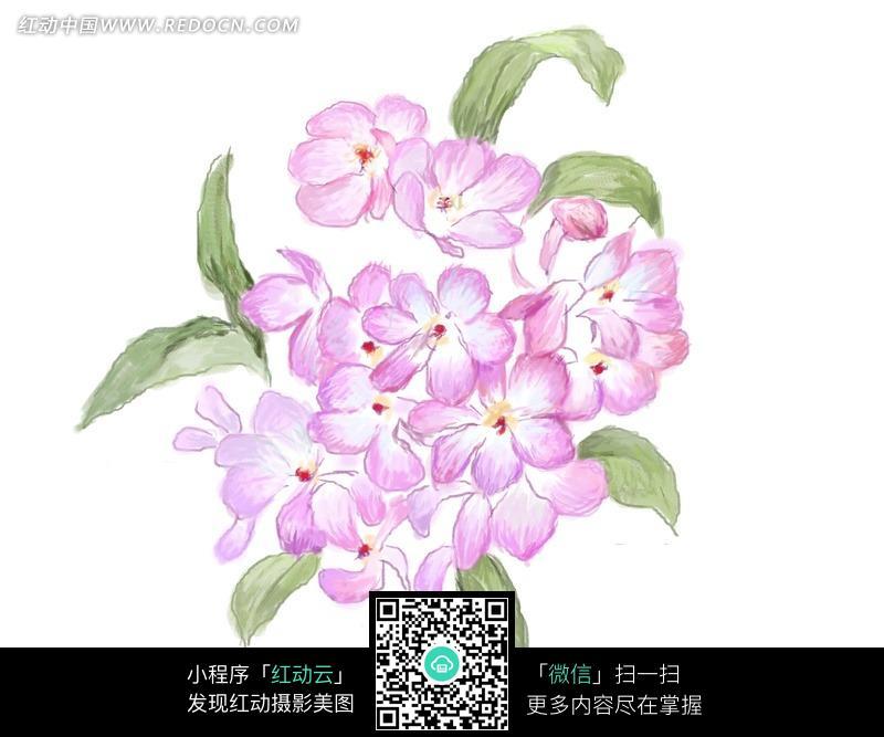 铅笔画彼岸花的画法_彼岸花简笔画画法