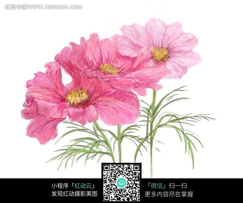 手绘洋红色波斯菊与叶子_花纹花边图片_红动手机版
