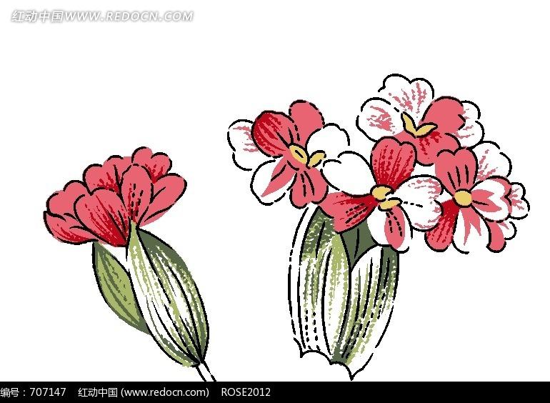 手绘石竹花与叶子图片