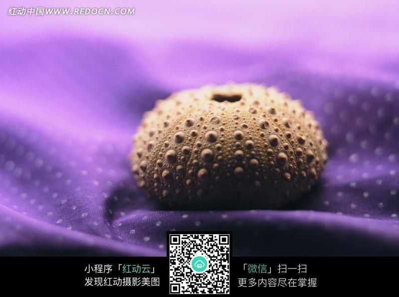 免费素材 图片素材 生物世界 水中动物 黄色凸钮纵纹球形贝壳  请您分