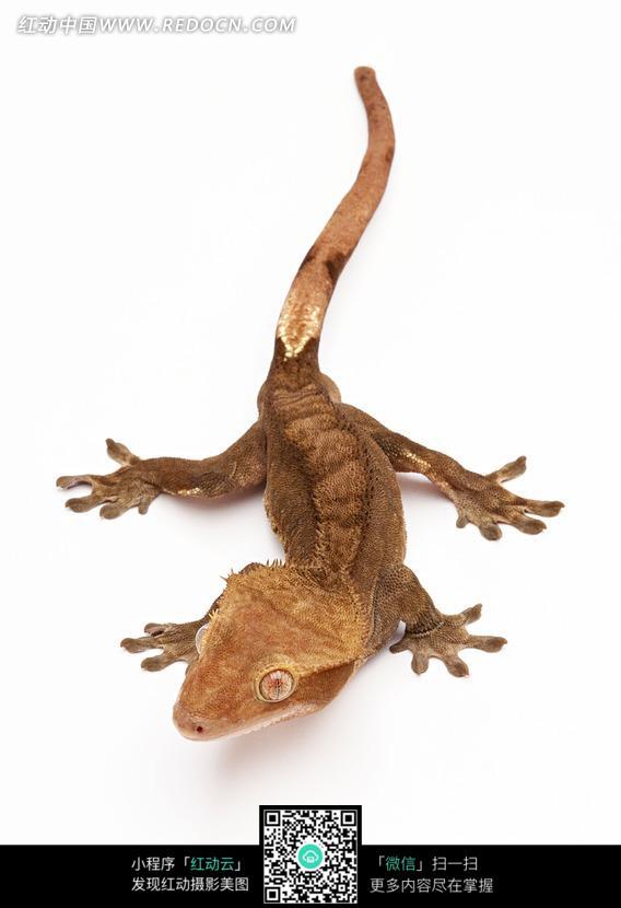 一只黄色的蜥蜴图片_陆地动物图片