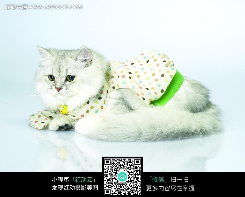免费素材 图片素材 生物世界 陆地动物 穿着衣服趴在地上的小猫咪  请