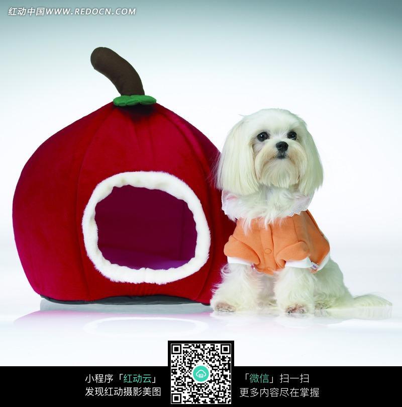 一个穿橘色衣服的小狗和红色狗窝