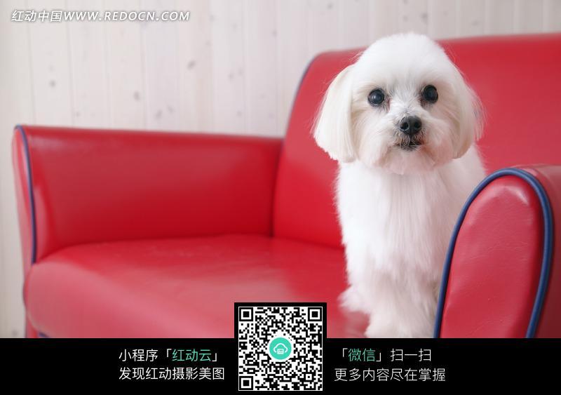 蹲在沙发上的狗图片_陆地动物图片
