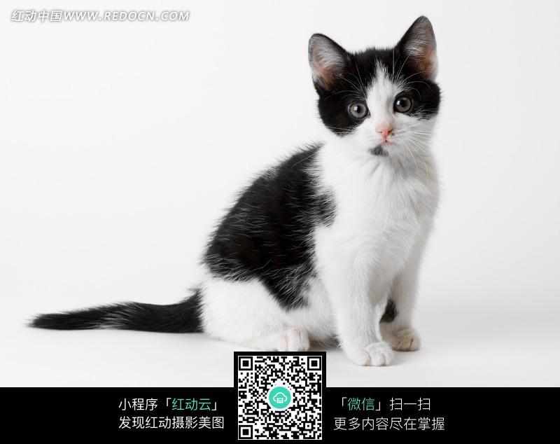 一只蹲坐着的猫咪侧身图片免费下载 编号747757 红动网