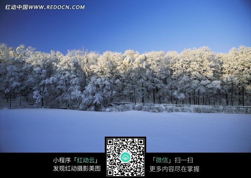 雪景 雪地 树林 蓝天图片