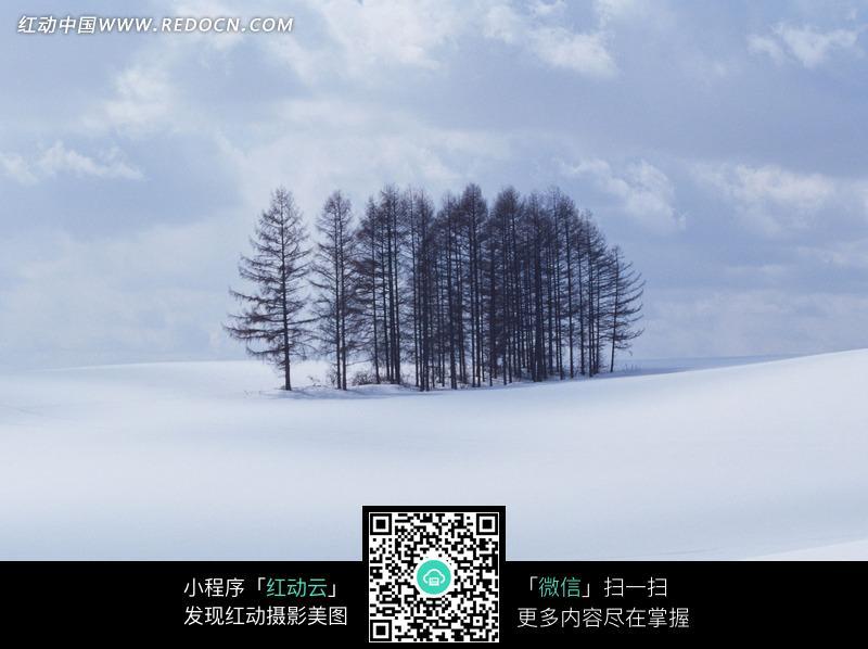 冰天雪地中的松树林图片
