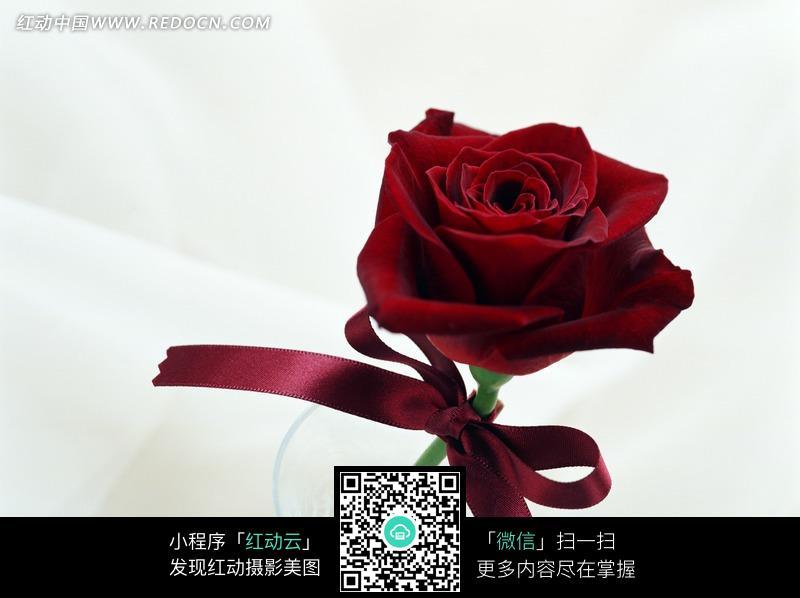 系着红丝带的白色玫瑰花