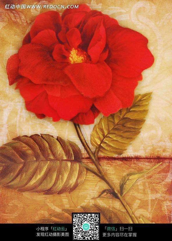一朵红玫瑰油画特写图片图片
