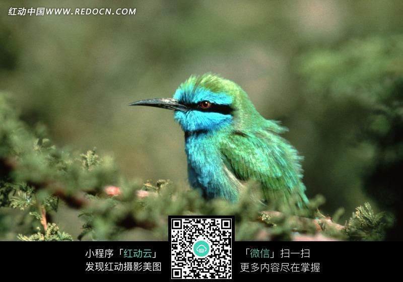 免费psd名片模板_荆棘鸟图片免费下载_红动网