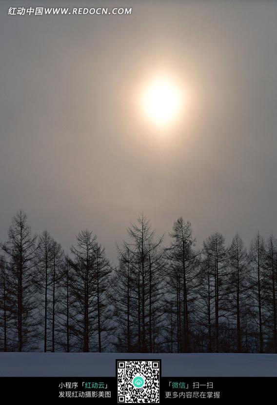 免费素材 图片素材 自然风光 自然风景 昏暗阳光下的一排树林