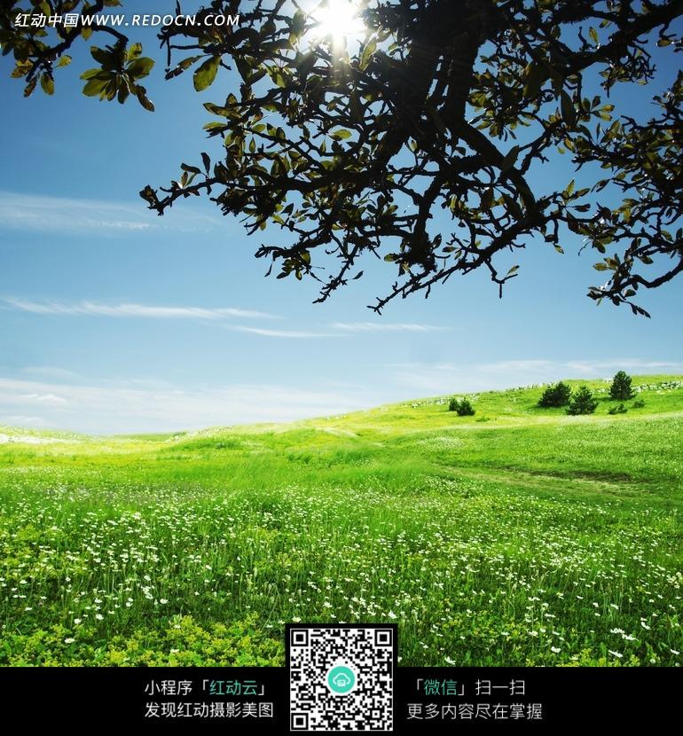 树荫下的原野图片_自然风景图片