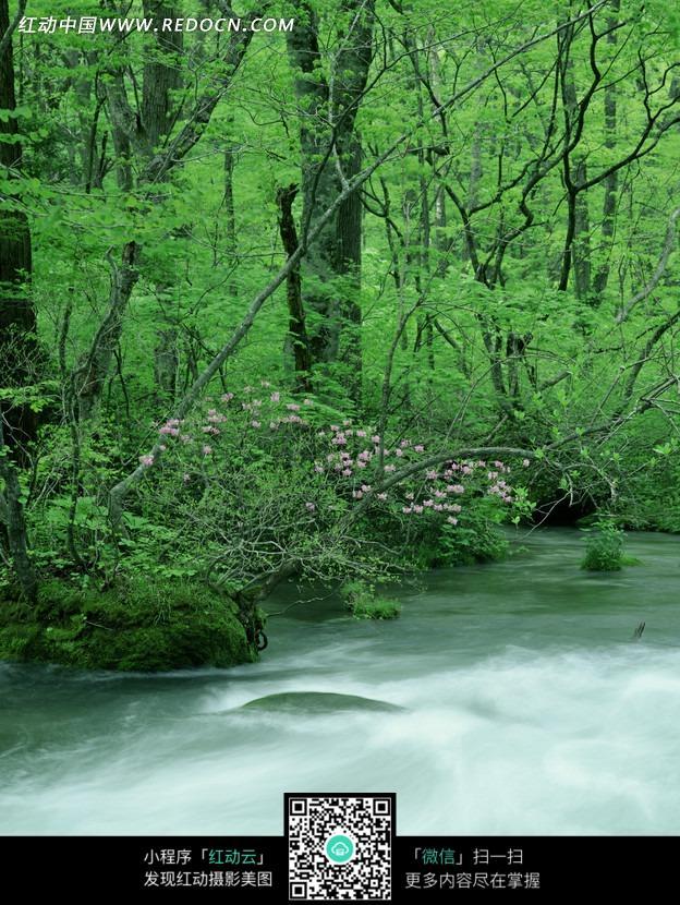 秋天树林里的溪流_自然风景图片_红动手机版
