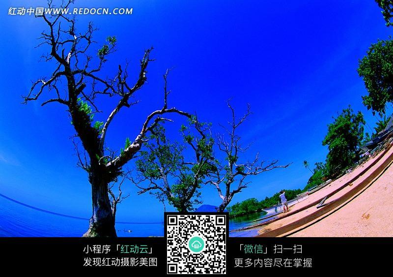 免费素材 图片素材 自然风光 海洋海边 广角镜头下的树木和沙滩  请您